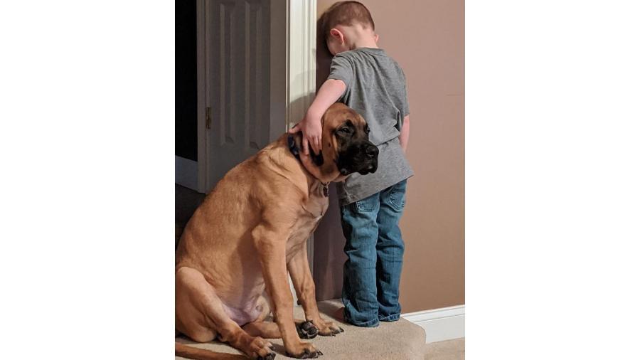 O cachorro Dash ficou ao lado de seu melhor amigo Peyton Smith mesmo durante o castigo - Reprodução/Facebook/Jilian Marie Smith