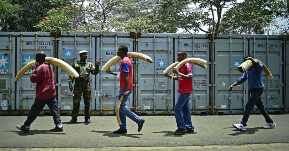 4.abril.2016 - Marfins confiscados são levados para um lugar reservado em  Nairóbi, Quênia. Cerca de 105 toneladas de marfins serão queimados no dia 30 de abril durante evento com especialistas em conservação e chefes de Estado africanos. O objetivo é enviar uma forte mensagem contra a caça predatória de animais