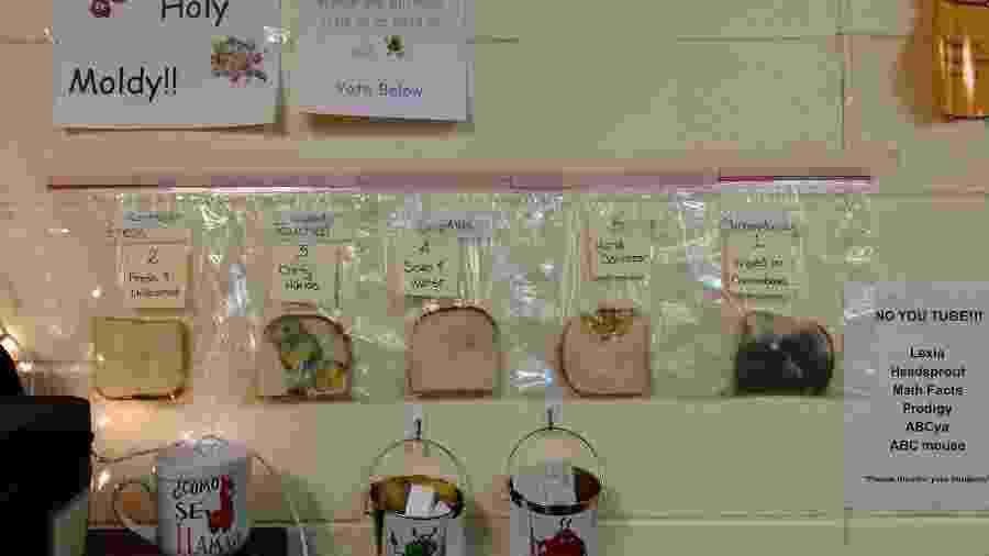 Experimento de Jaralee Annice Metcalf com micróbios nas fatias de pão - Arquivo pessoal/Jaralee Annice Metcalf/Facebook