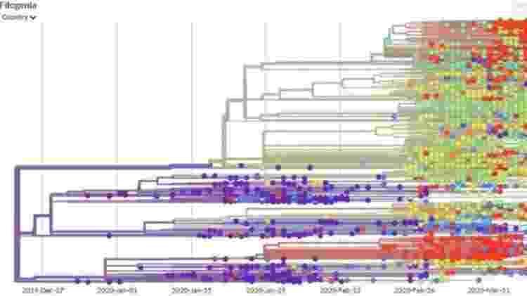 Site NextStrain apresenta mutações genéticas ao longo do tempo - Reprodução - Reprodução