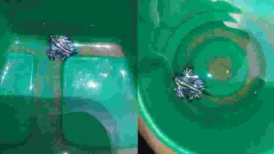 Dragões azuis encontrados no Oceanário Nacional de Padre Island - Reprodução/Facebook-Hunter Lane
