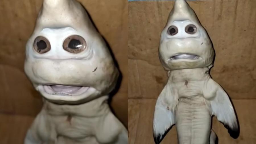 """Tubarão com cara """"humana"""" teria sido encontrado por um pescador indonésio - Reprodução/Youtube"""