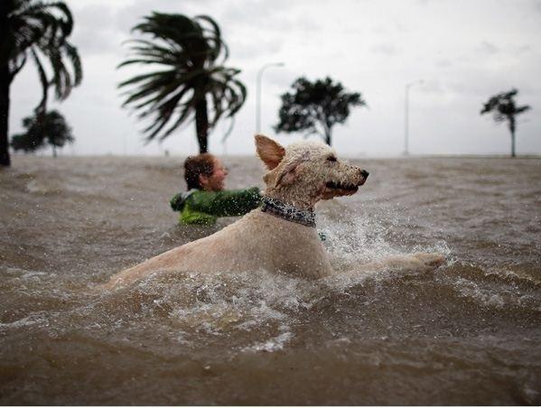 21.jul.2015 -  O menino não está pegando carona com um cachorro gigante. Os dois estão nadando em planos diferentes, a culpa é da perspectiva em que a foto foi tirada