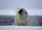 Paul Nicklen/National Geographic Creative
