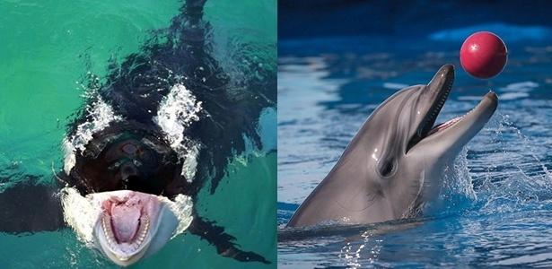 18.out.2016 - Montagem com orca e golfinho