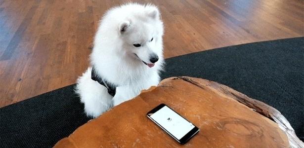 Google Busca para cães e gatos: em breve próximo de você (ou não)