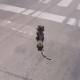 Cãozinho foge e dá início a uma perseguição cinematográfica no meio da rua; assista - Reprodução