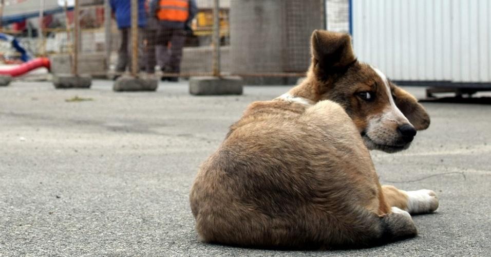 Cão que vive em Chernobyl