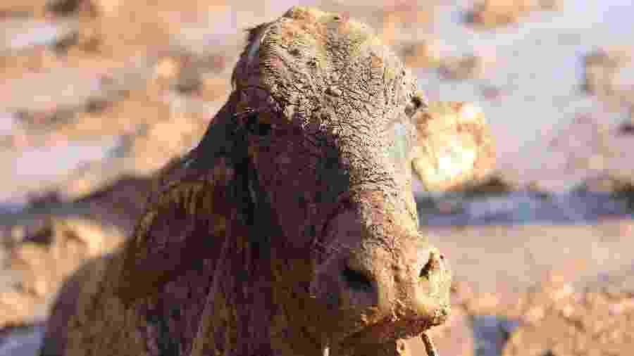 Relatos de vítimas apontam para comportamento estranho de animais antes da chegada da lama - Wilton Júnior/Estadão Conteúdo
