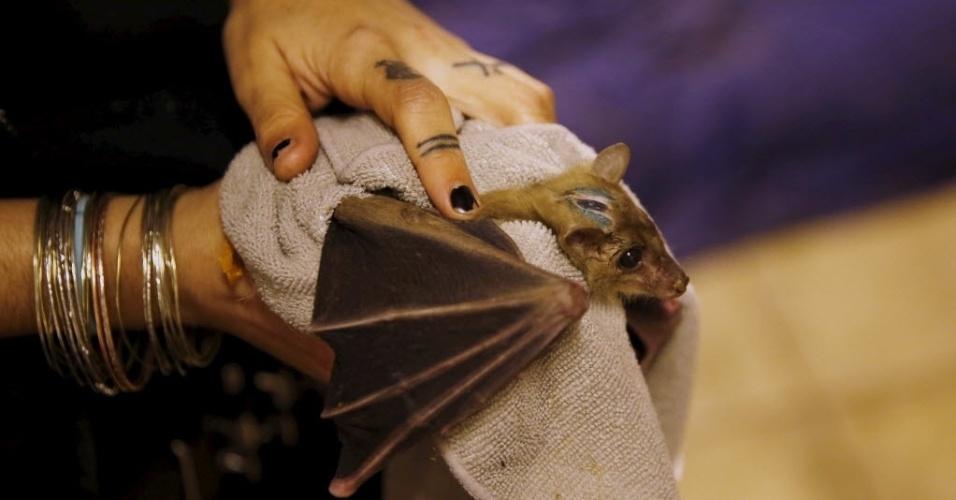 23.fev.2016 - Embrulhado em uma manta, este morcego recebe cuidado especial de Lifschitz