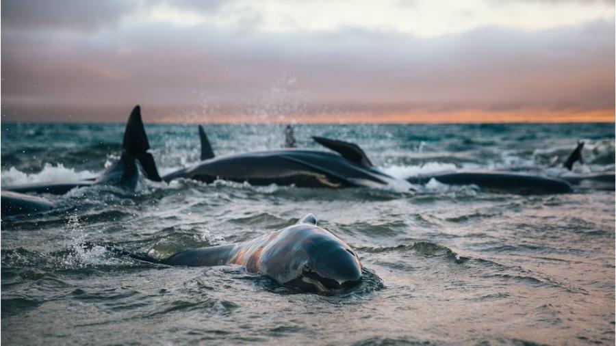 As baleias choravam e gritavam umas para as outras, lembra Liz, que ficou com elas no mar até chegar ajuda - Liz Carlson/Acervo pessoal