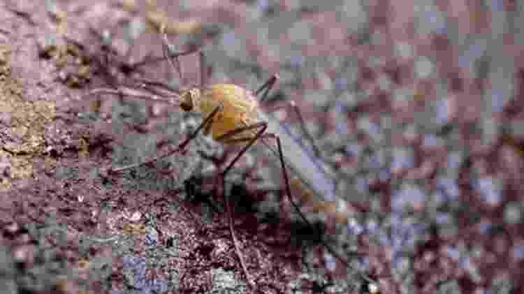 mosquito - MARTIN DOHRN/SCIENCE PHOTO LIBRARY   - MARTIN DOHRN/SCIENCE PHOTO LIBRARY