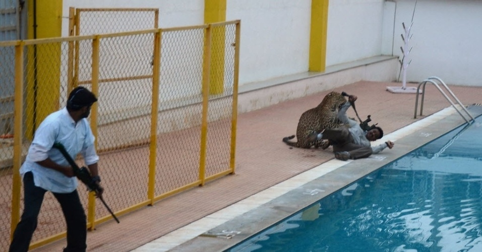 8.fev.2016 - Um leopardo macho entrou em uma escola em Bangalore, na Índia, e feriu seis pessoas que tentavam capturá-lo. O animal, que invadiu a Escola Internacional Vibgyor, acabou sendo anestesiado e liberado. Um censo recente da vida selvagem estimou que a Índia possui entre 12 mil e 14 mil leopardos. Câmeras flagraram o momento em que o felino atacou um homem perto da piscina