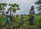 Enquanto países ricos fecham suas portas para os refugiados, Uganda os acolhe - Nichole Sobecki/The New York Times