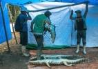 Chefs se embrenham na Amazônia em busca de novos ingredientes como a carne de jacaré (Foto: Meghan Dhaliwal/The New York Times)