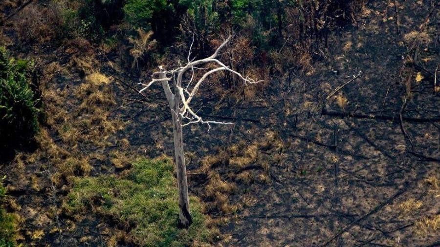 A fumaça e as chamas cobriram milhares de hectares de floresta tropical - Getty Images