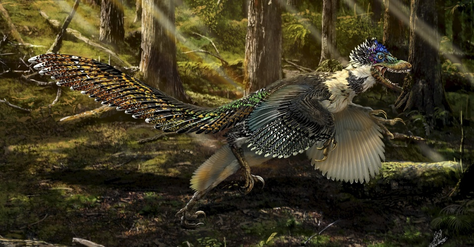 17.jul.2015 - ANCESTRAL DO VELOCIRAPTOR - Reconstrução mostra a nova espécie de dinossauro, o Zhenyuanlong suni, que tinha braços curtos e penas, proveniente do Cretáceo Inferior (cerca de 125 milhões de anos atrás), encontrada na China. A imagem foi divulgada pela Universidade de Edimburgo na quarta-feira (15). Cientistas descobriram o fóssil do dinossauro alado, considerado um ancestral do velociraptor