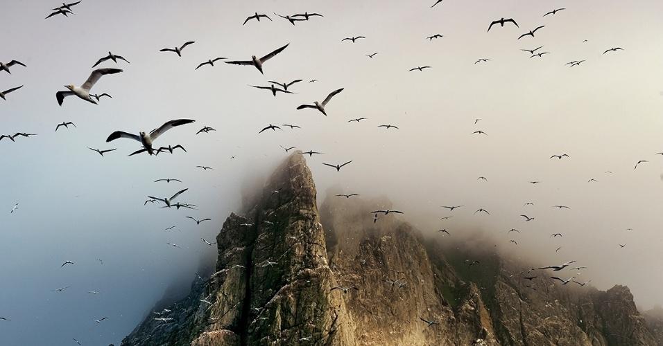6.nov.2015 - Legiões de aves marinhas cruzam o céu como flechas e fazem seus ninhos nas montanhas. Geralmente escondida pelas nuvens, o extremo norte da ilha Borery, na Escócioa, está a 384 m acima do mar. Sessenta mil pares de gansos-patola - a maior colônia do mundo - fazem seus ninhos nela