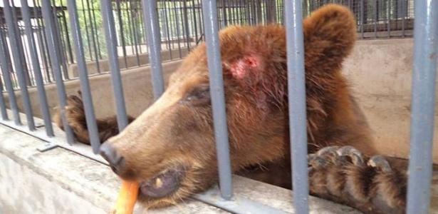 10.dez.2015 - Imagem de arquivo mostra urso pardo no Parque Zoobotânico de Teresina