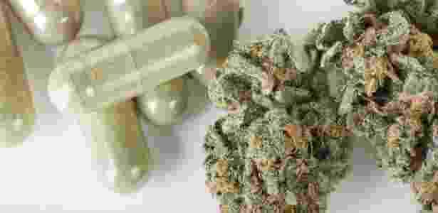 O uso da cannabis na França será extremamente regularizado; não será permitido fumá-la, levando em conta os riscos cancerígenos do tabaco - IStock