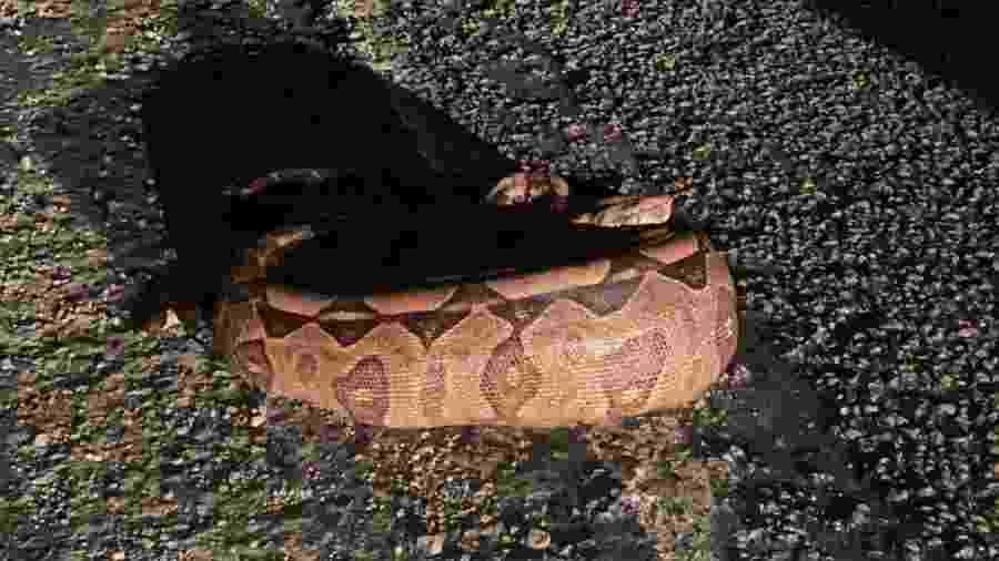 Jiboia é encontrada em terreno após engolir cachorro em João Pessoa - Polícia Militar / Divulgação