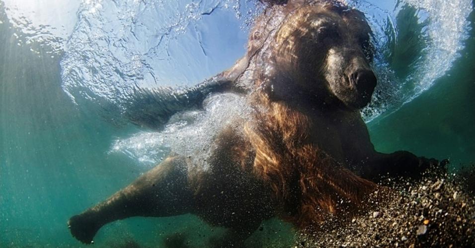 """19.fev.2016 - O primeiro lugar na categoria Internacional Grande Angular foi obtido por Mike Korostelev por esta foto feita no lago Kuril, na Rússia. """"Eu construí uma jaula para ficar protegido enquanto fotografava o urso pescando"""", disse ele"""
