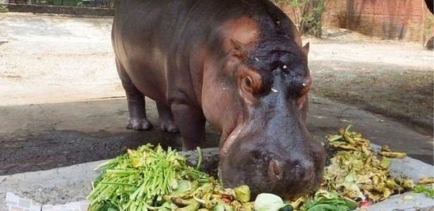 Parlamentares locais propuseram reforma no Código Penal para garantir penas maiores em casos de maus tratos contra animais - Zoológico de El Salvador