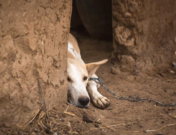 Martoussia descansa depois que um verme da Guiné foi retirado de sua perna em Kakale Massa, Chade - Jane Hahn/The New York Times