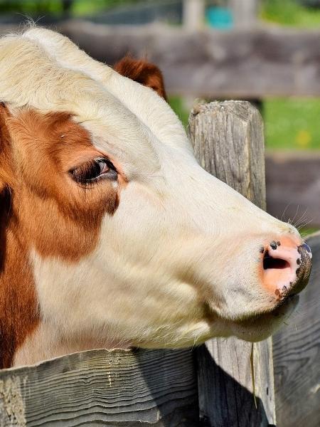 A medida é uma resposta ao bloqueio pelo governo argentino das exportações de carne bovina do país por 30 dias, anunciado ontem  - Pixabay