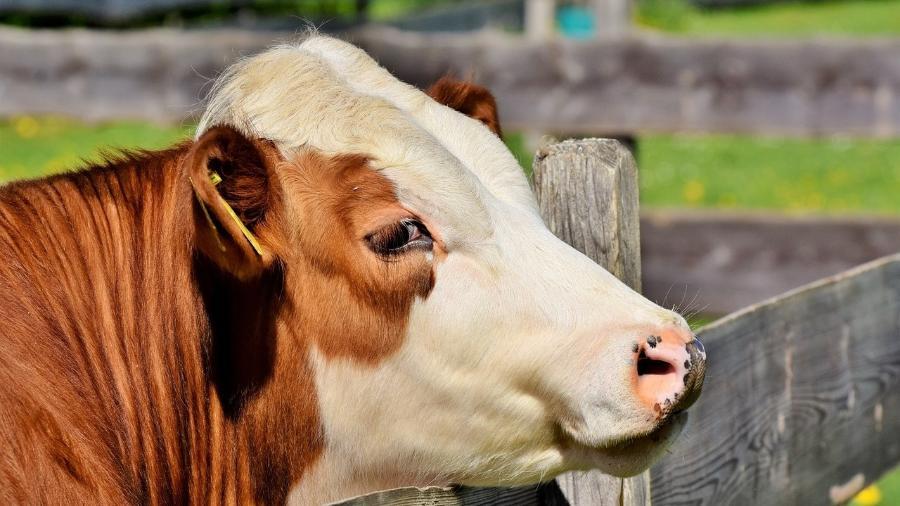 Queda no abate de bovinos foi verificada em 23 das 27 unidades da federação - Pixabay
