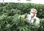 Legalização da maconha no Canadá faz empresários sonharem com grandes lucros (Foto: Dave Chan/The New York Times)