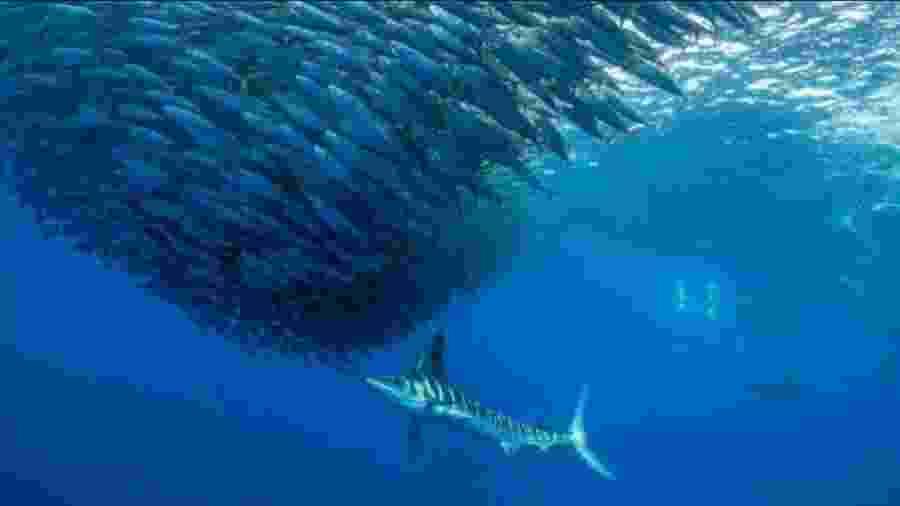 Aumento das temperaturas tem acelerado redução do oxigênio nos oceanos - IUCN