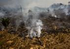 Desmatamento da Amazônia cai em julho, mas sobe em 12 meses - Gustavo Basso/NurPhoto via Getty Images