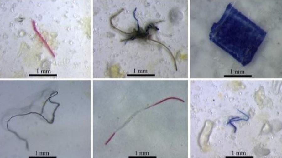 Partículas de plástico encontradas em peixes que vivem em nascentes e riachos amazônicos - Labeco/UFPA