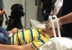 Reprodução/Facebook/Assistance Dogs New Zealand