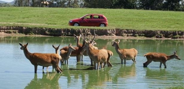 Parque do RS iniciou os abates de cervos em razão de um surto de tuberculose
