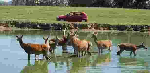 Parque do RS iniciou os abates de cervos em razão de um surto de tuberculose - Pampas Safari/Divulgação