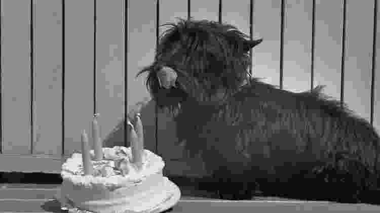 Fala em sua festa de aniversário de 4 anos - Getty Images - Getty Images