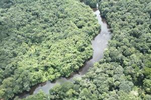 Estudo associa desmatamento e queda de produtividade da pesca na Amazônia (Foto: William Milliken-RBG Kew, Bruce Hoffman, Marcelo F. Simon, Terry Henkel, Hans ter Steege e Emilio Vilanova/Divulgação)