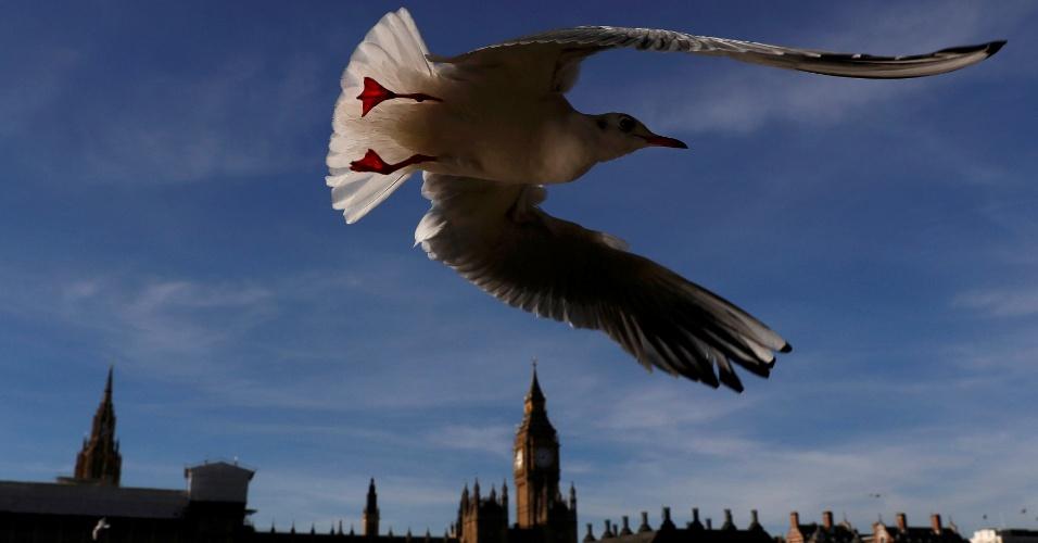 3.nov.2016 - Gaivota voa sobre as casas do parlamento em Londres, no Reino Unido