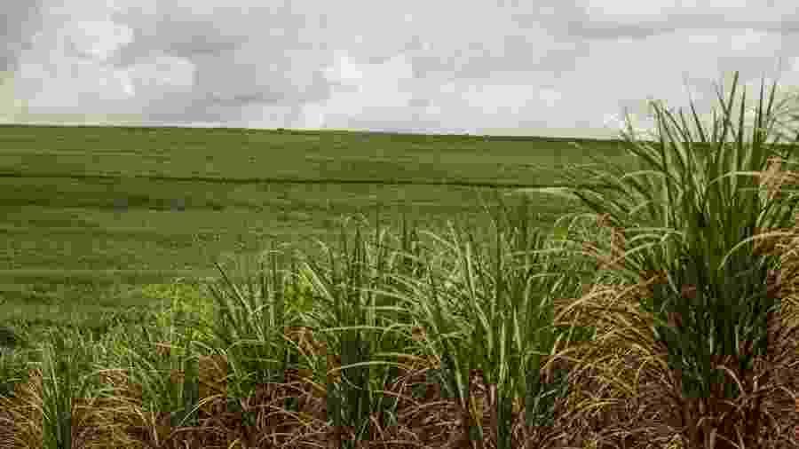 Cana-de-açúcar em Minas Gerais - Ricardo Benichio/Folhapress