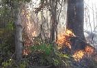 Incêndio atinge parque na Bahia; índios e voluntários tentam conter fogo - Alfredo Santana/Divulgação