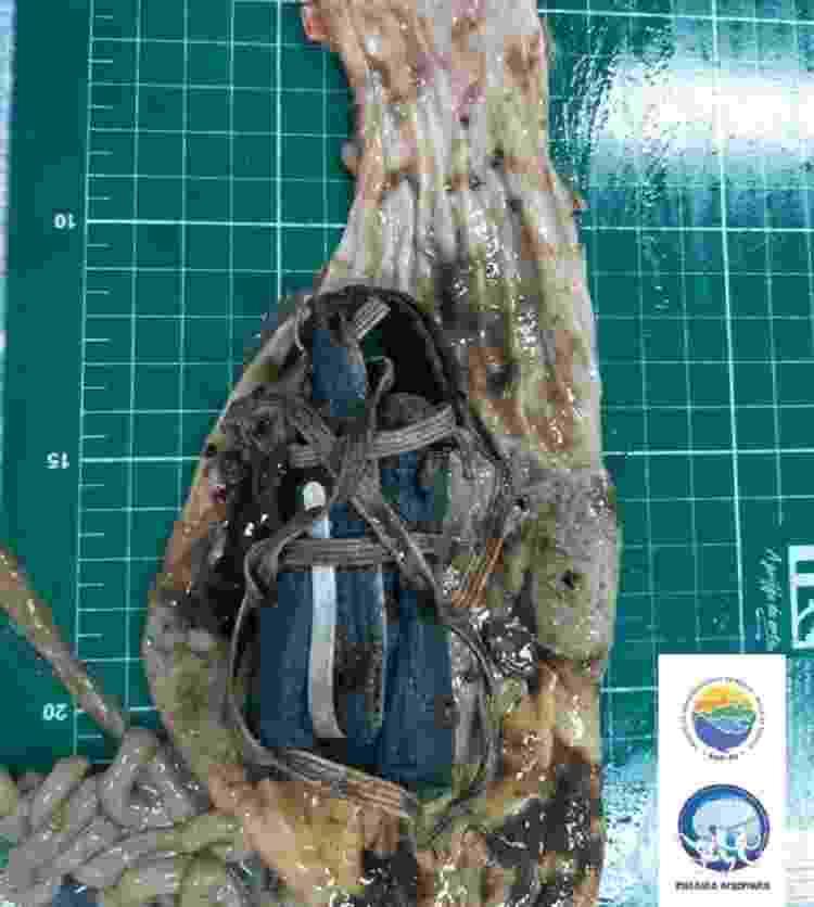 A máscara facial foi encontrada dentro do estômago do pinguim durante a necropsia - Reprodução/Facebook/Instituto Argonauta - Reprodução/Facebook/Instituto Argonauta