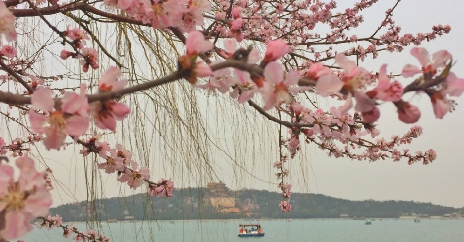 19.mar.2016 - Flores de pessegueiro enfeitam as proximidades do Palácio da Primavera, em Pequim (China). Com o aumento da temperatura, as árvores entram em seu período de floração, assim como as magnólias, atraindo muitos visitantes ao local