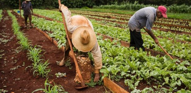 Trabalhadores que são também proprietários trabalham na terra em uma fazenda cooperativa orgânica próximo a Havana, em Cuba