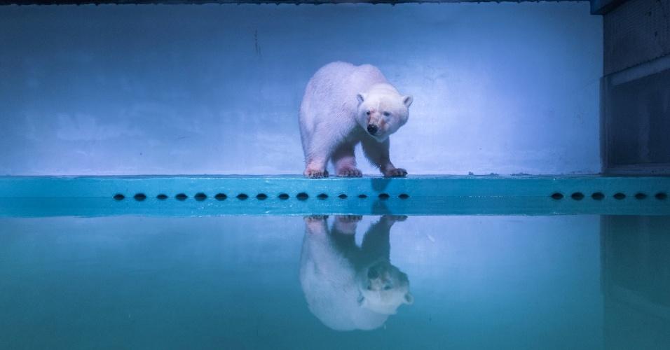 """28.jul.2016 - Mais de 500 mil ativistas assinaram petição pelo fechamento do aquário em um shopping center onde vive um urso-polar na China. O animal, chamado Pizza, recebeu o apelido de """"urso-polar mais triste do mundo"""" depois da divulgação de imagens e vídeos que mostram suas condições de vida"""