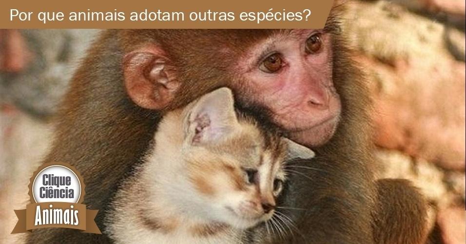 Por que os animais adotam bichos de outras espécies?