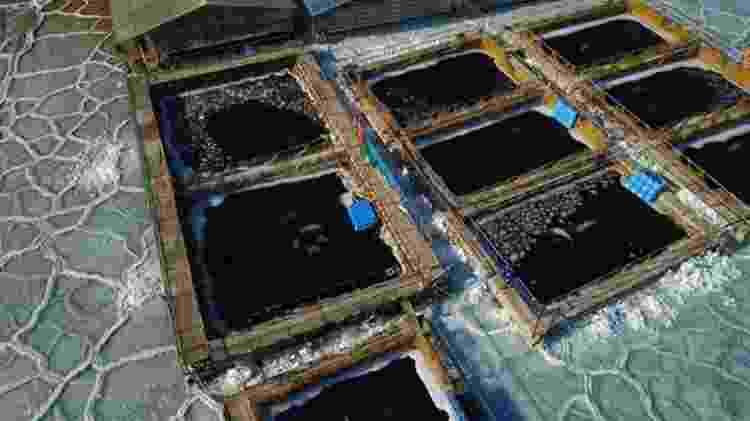 Imagens aéreas mostram pedaços de gelo nos tanques, o que provavelmente está dificultando que baleias consigam se manter aquecidas - AFP/BBC