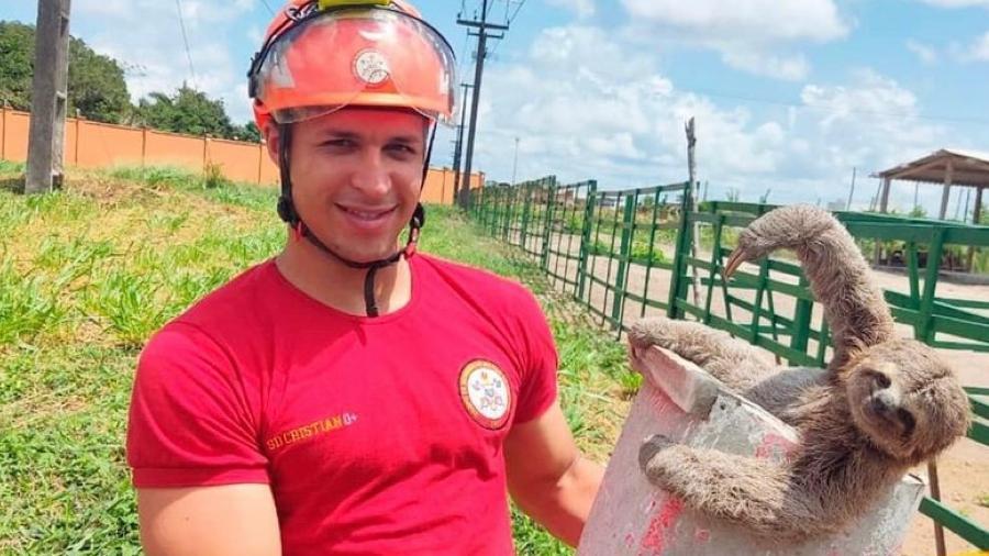 """Preguiça """"posa"""" para foto e parece dar um sorriso ao ser resgatada por bombeiro - Reprodução/ CBM-PB"""