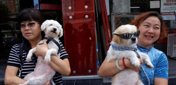 Ativistas chinesas seguram cachorros resgatados de festival de carne canina, em Pequim